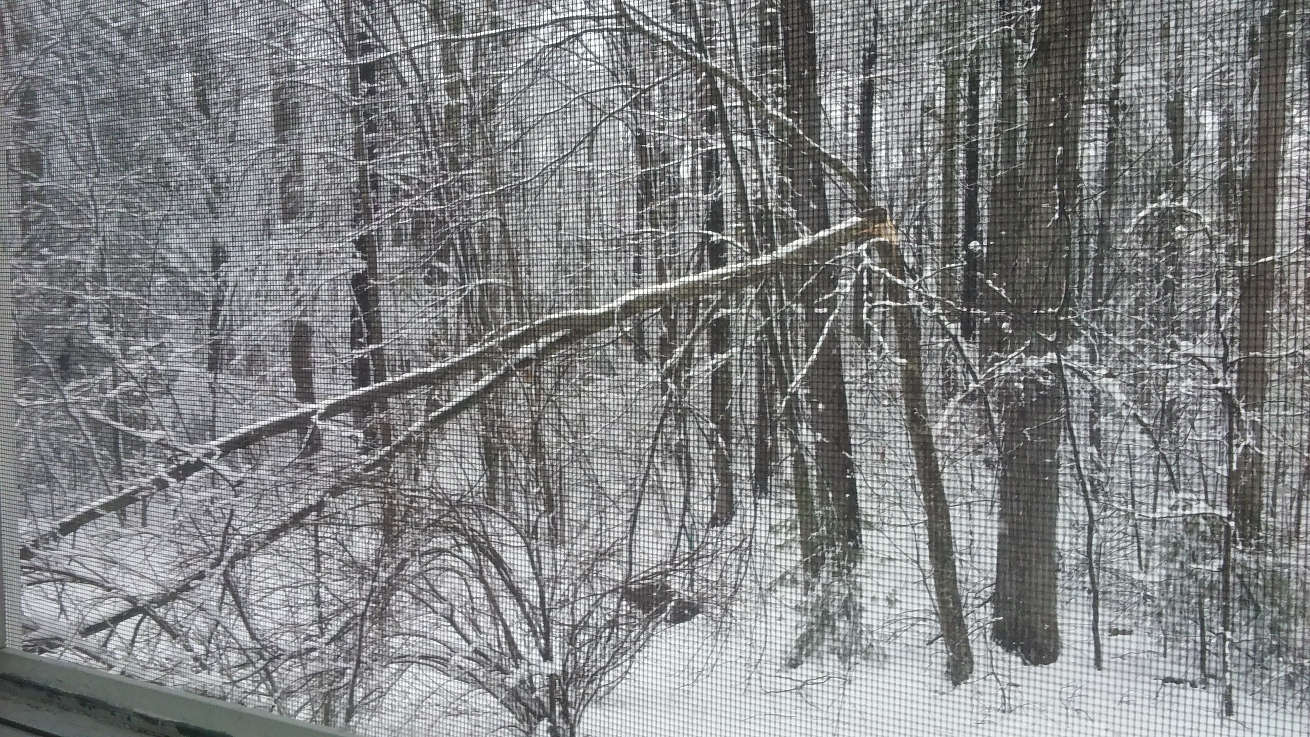 Tree broken off by heavy snow.